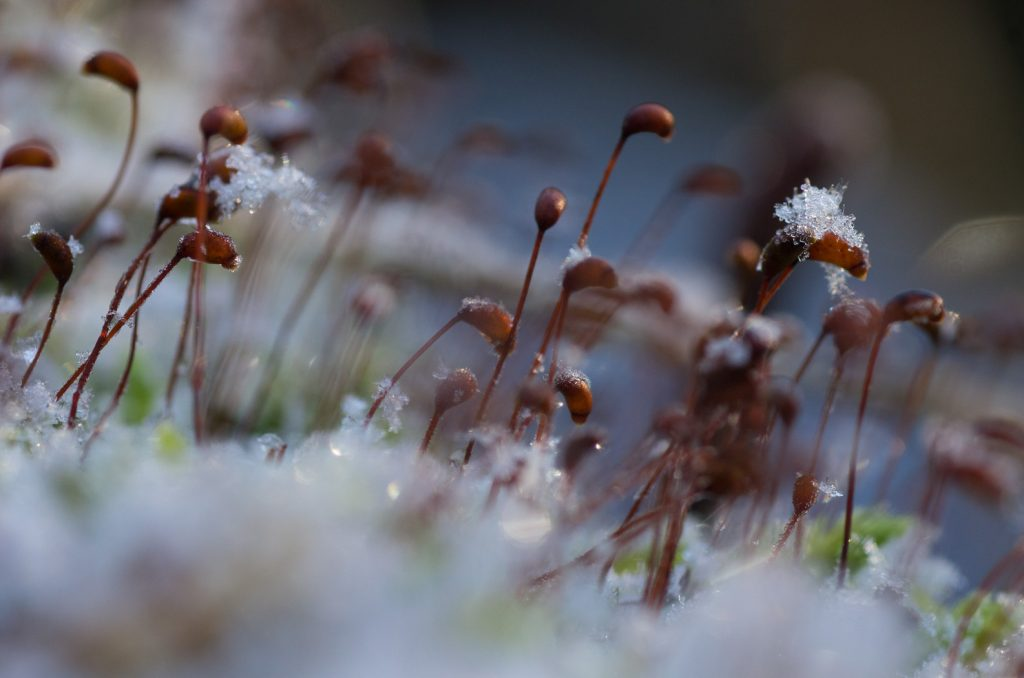 Macrofoto's Winter